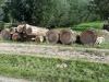 Bomenkap-Schollebos-2020-scaled
