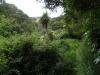 """Een wandeling door """"Native Bush"""" in Nieuw Zeeland"""