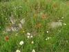Vlindertuin Schollebos