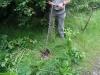 Reuzenberenklauw-verwijderingsexperiment-uitboren2-Spartaterrein-31mei18