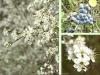 34-Collage-Sleedoorn-web