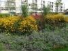 Plantsoenen Havensteder Gorzen-, Wulpen- en Sternenhof